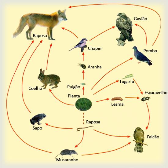 Teia Alimentar; Cadeia de Parasitos; Cadeia de Predadores; Cadeia de