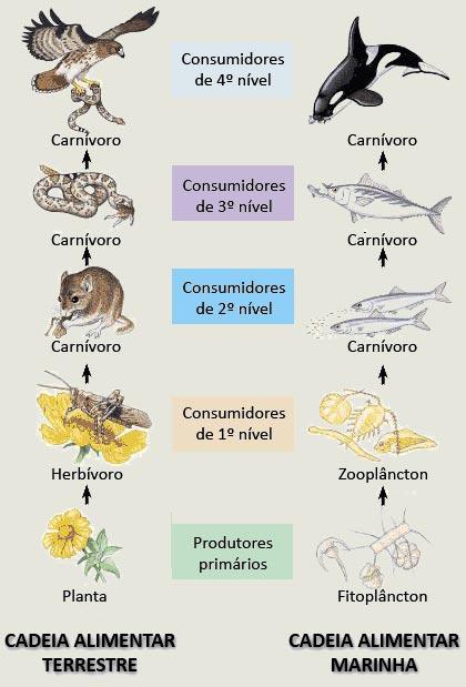 Figura 3 E 4   Teia Alimentar Em Ecossistema Aqu  Tico E Terrestre
